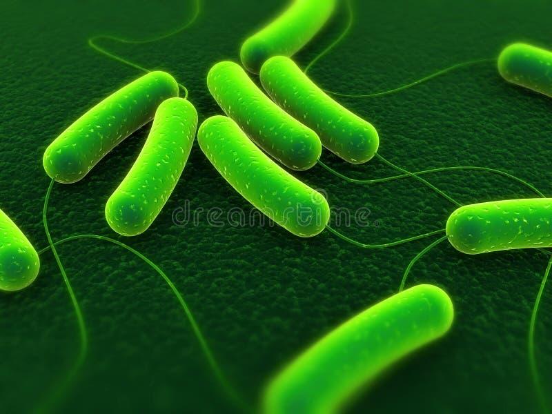 Bacterias de Coli stock de ilustración