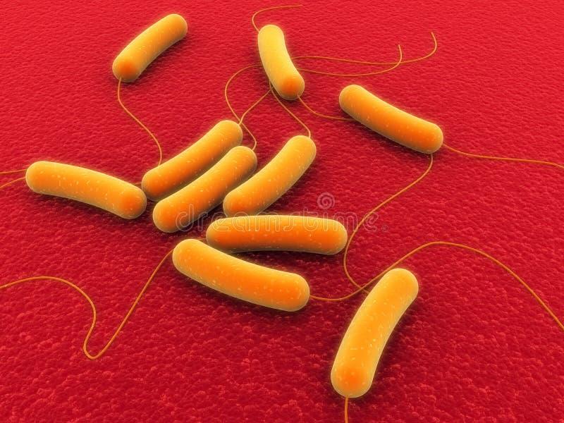 Bacterias de Coli ilustración del vector