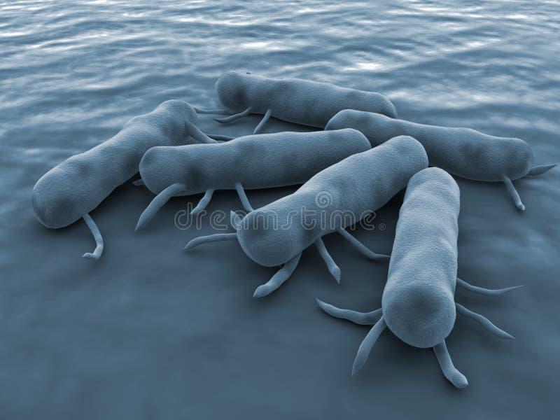 Bacterias de las salmonelas ilustración del vector