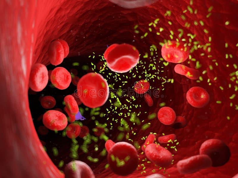 Bacterias en una arteria ilustración del vector
