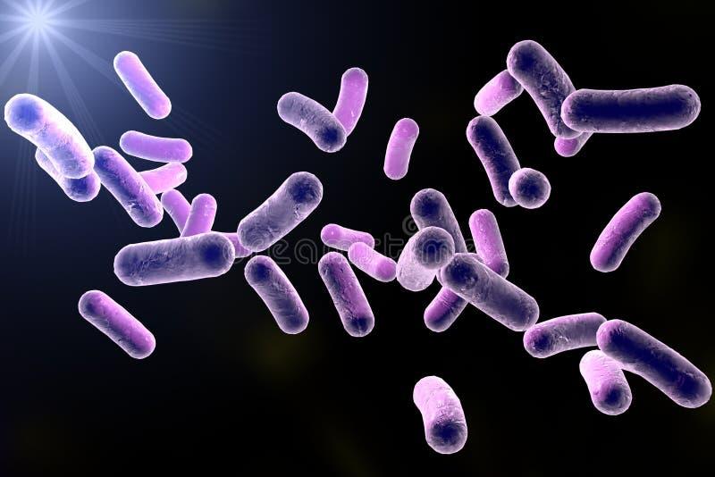 Bacterias formadas Rod ilustración del vector