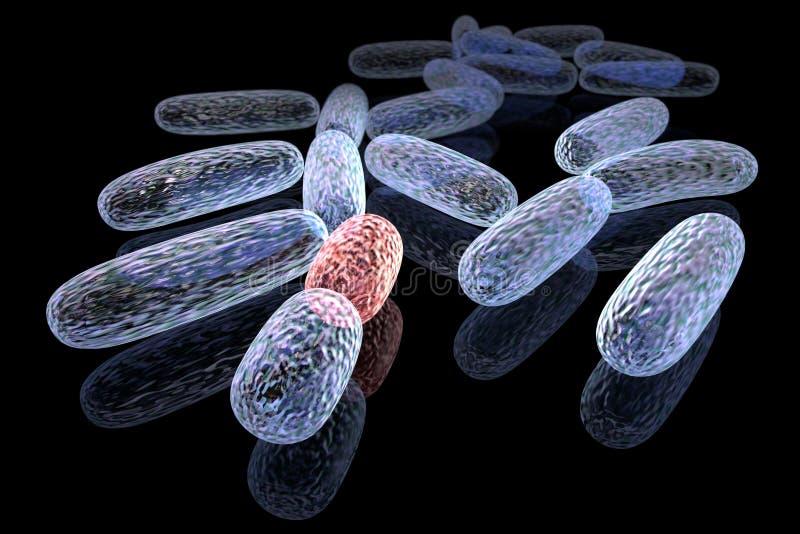 Bacterias transformadas ilustración del vector