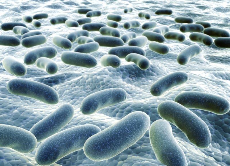 Bacteries 向量例证