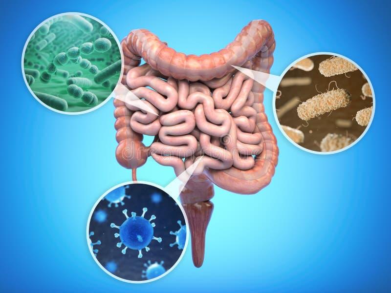 Bacteries av den mänskliga inälvan, vård- begrepp för inälvs- floratarmkanal royaltyfri illustrationer