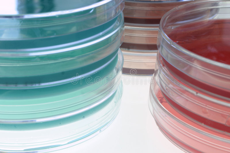 Bacteriological media 2 stock photography