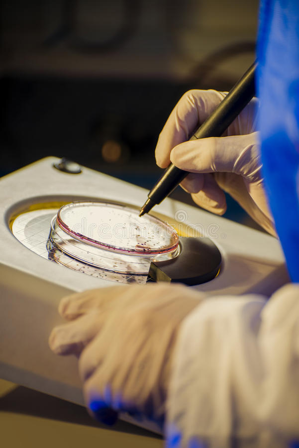 Bacteriology royalty free stock image
