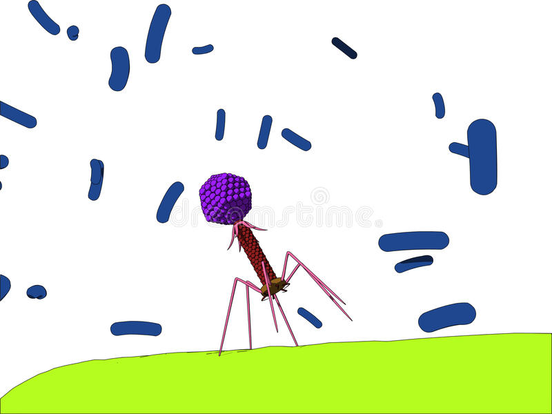 Bacteriophage Royalty Free Stock Images