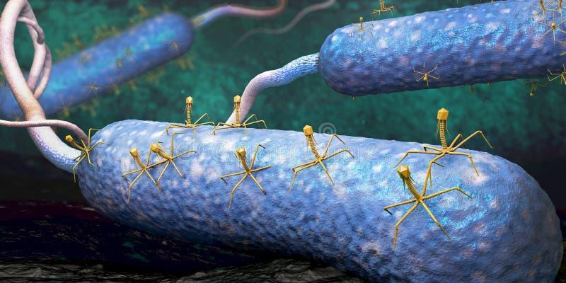Bacteriophage- eller fagocytvirus som anfaller och smittar bakterier royaltyfri illustrationer