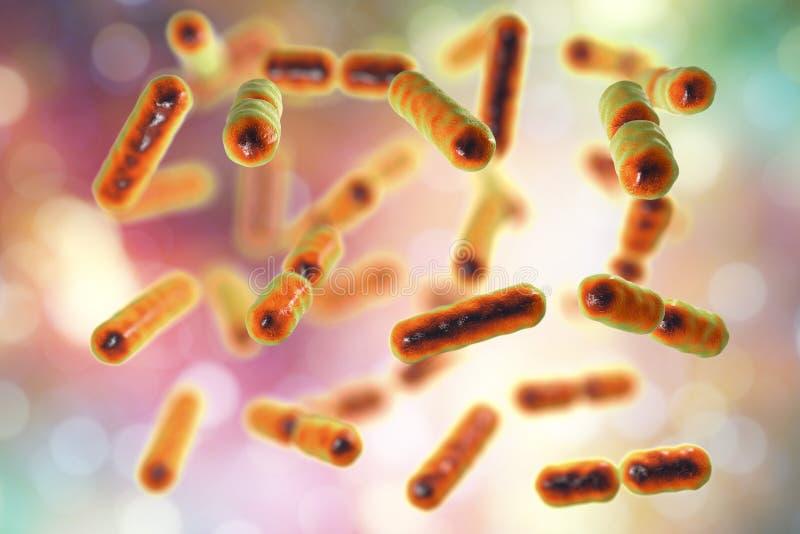 Bacteroide de bactéries fragilis, le composant principal du microbiome normal de l'intestin humain illustration libre de droits
