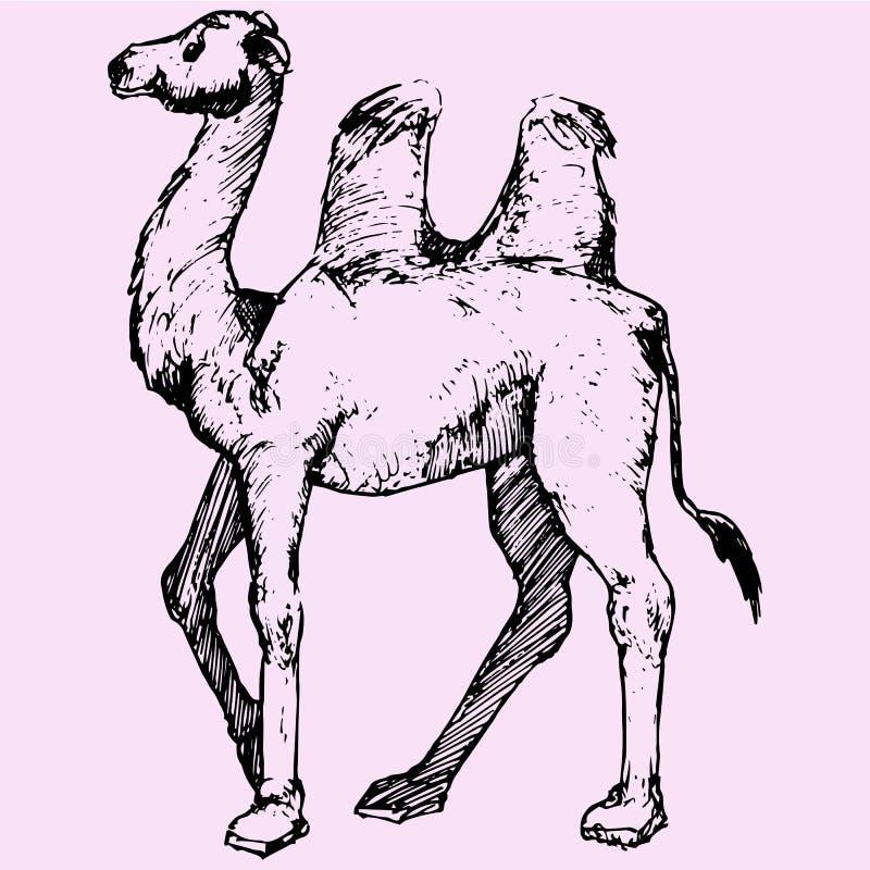 bactrian kamel stock illustrationer