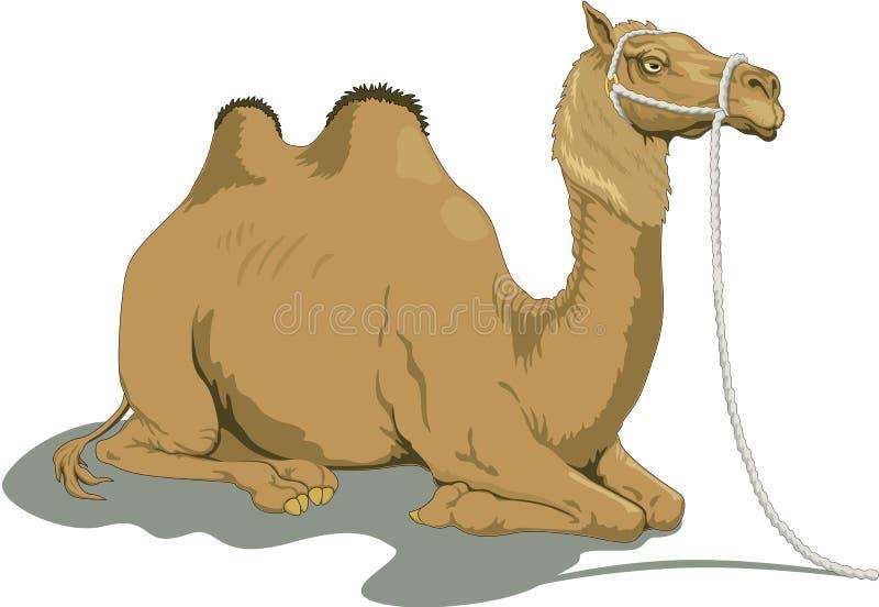 Bactrian kamel som lägger ner illustration stock illustrationer