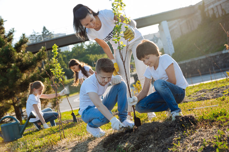 Baczne chłopiec zasadza nowego drzewa w parku zdjęcie stock