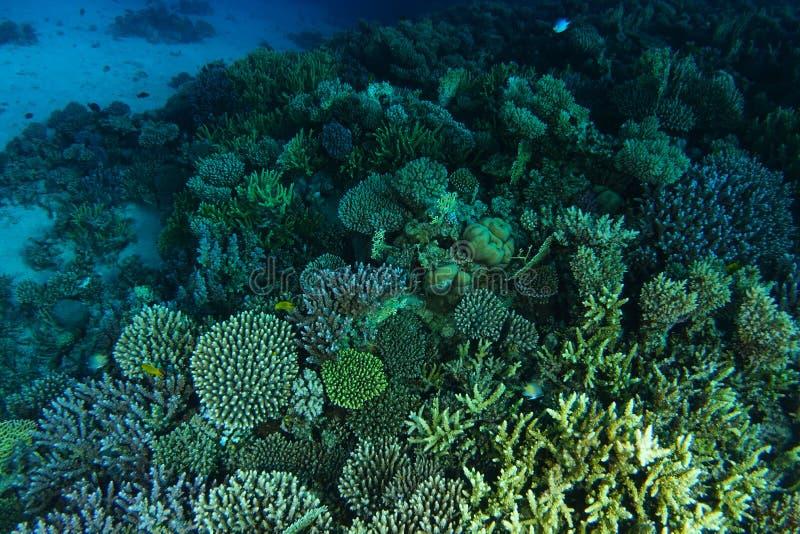 Bad över korallträdgård för grön färg arkivfoton
