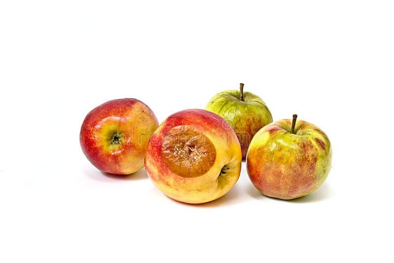 Bad apple among edible apples royalty free stock photo