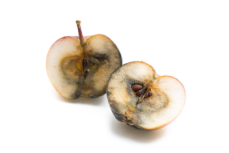Bad apple halves. Rotten apple cut in two halves on white background stock image