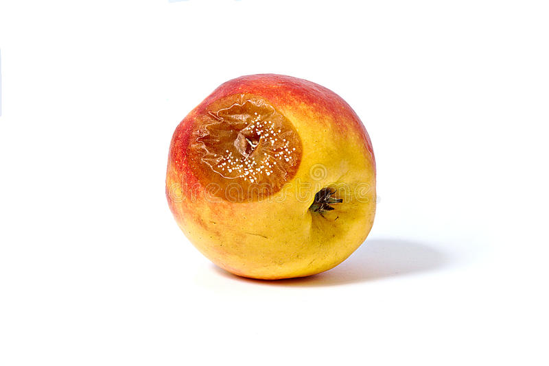Bad apple. With large brown spot and mold stock photography