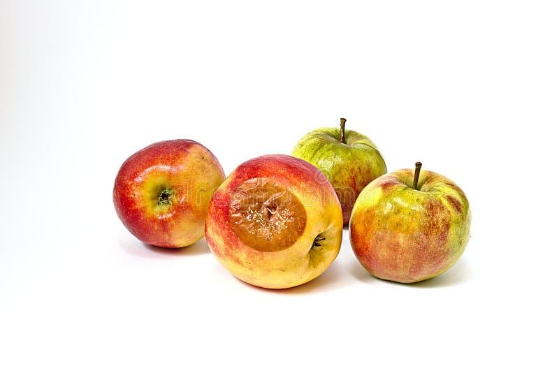 Bad apple. With mold among edible apples stock photography