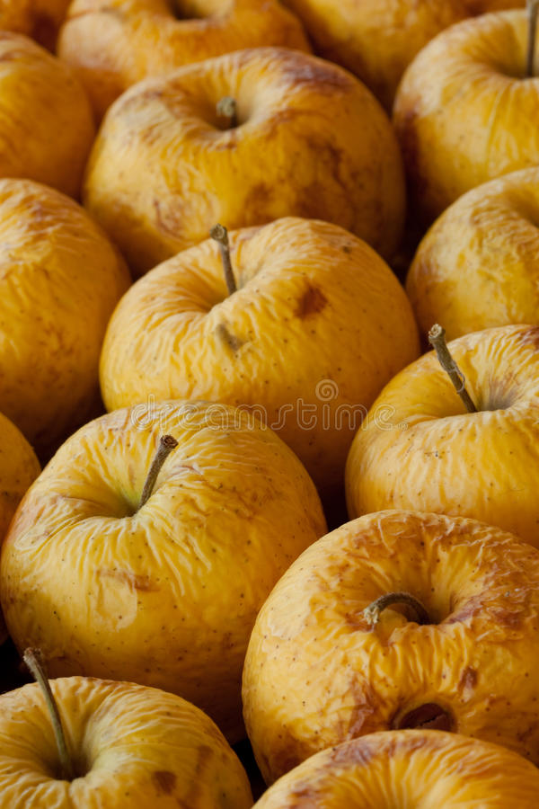 Bad apples. A rotting diseased yellow apples stock photography