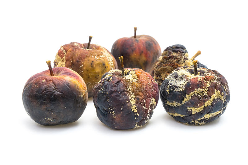 Bad apples. Many rotten apples on white background seen from front stock image