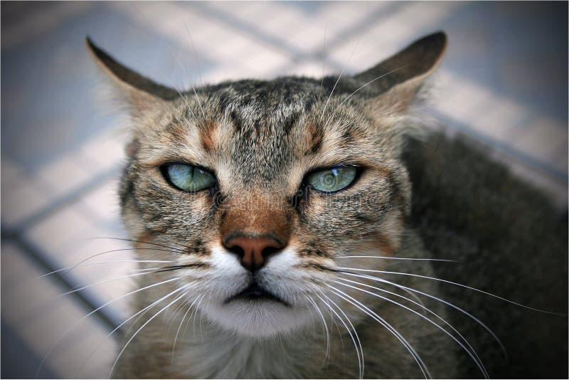 bad cat 库存照片
