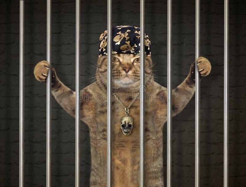 Bad cat behind bars royalty free stock photography