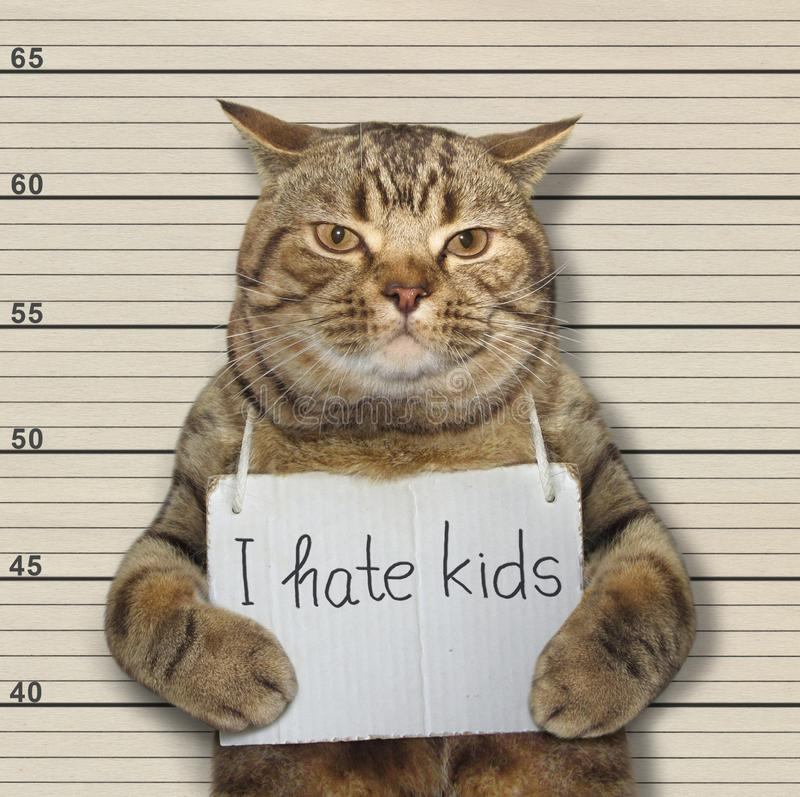 Bad cat hate kids royalty free stock images