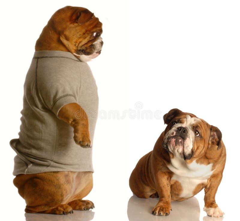 Download Bad dog stock image. Image of concept, argue, animal, childish - 8301469