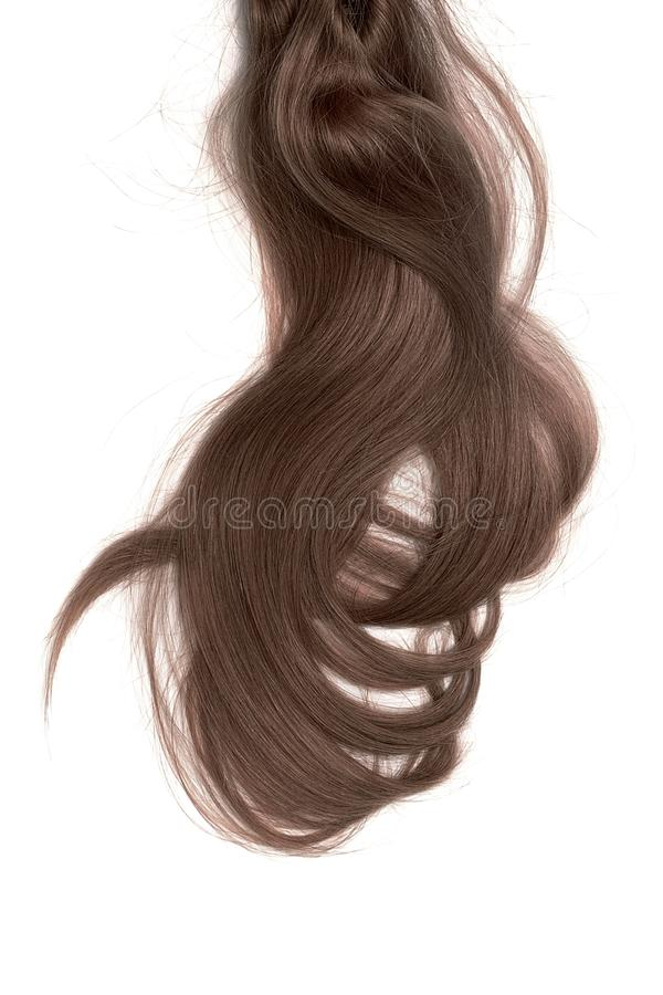 Bad hair day concept. Long, brown, disheveled ponytail. Natural healthy hair isolated on white background. Detailed clipart for your collages and illustrations stock photography