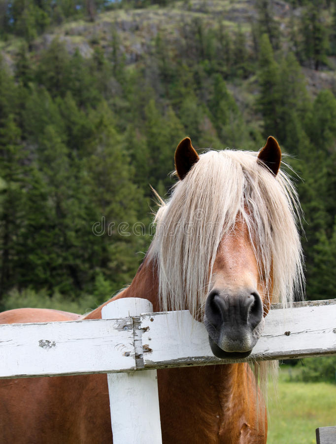 Bad hair day! royalty free stock images