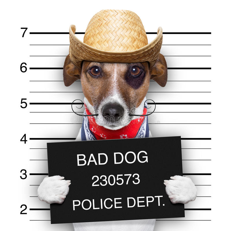 Bad mexican dog. Mugshot of a mexican very bad dog