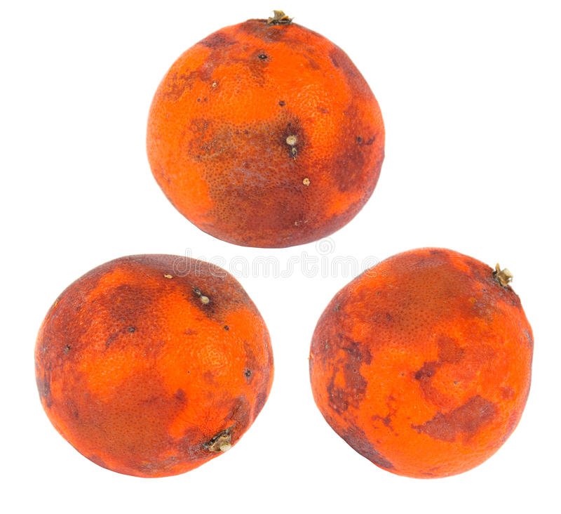 Bad Orange Royalty Free Stock Image