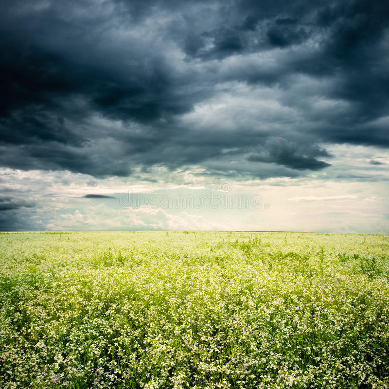Bad weather. Above the white flowers field stock photos