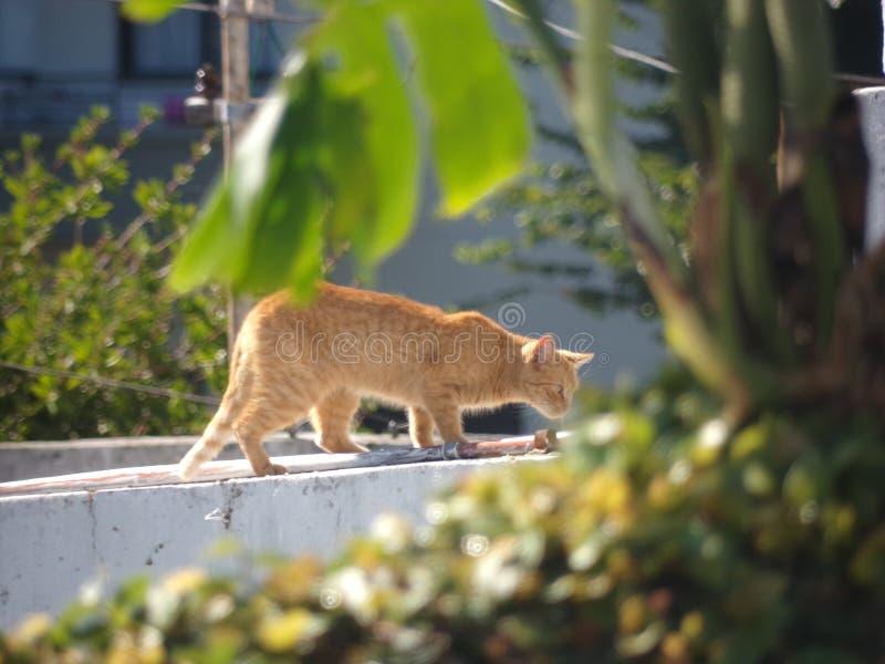 Badacza cutie kot w zieleni obraz stock