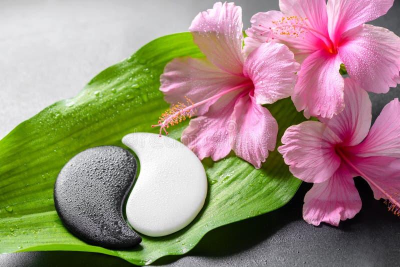 Badekurortdesign von rosa Hibiscusblumen und Yin-Yang von s lizenzfreies stockfoto