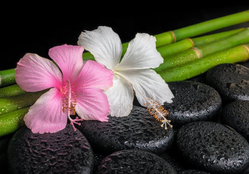 Badekurortkonzept von Zenbasalt-Stein-, weißen und rosahibiscusen blühen stockfoto