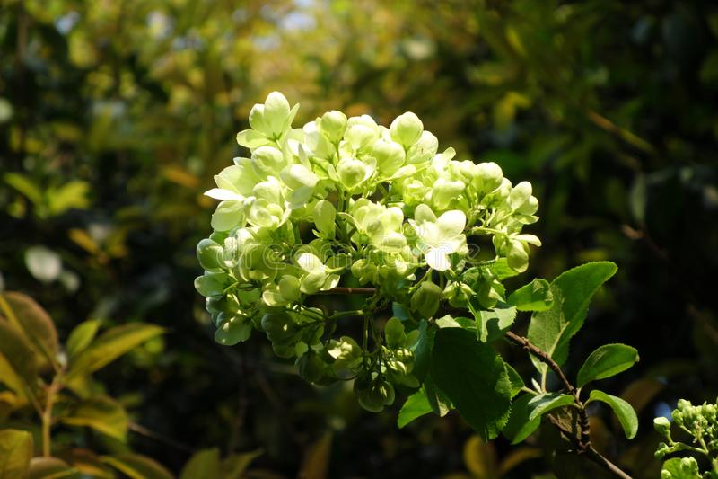 Baden in den Sonne ` s Blumen stockfoto