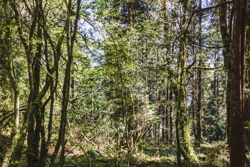 Baden Powell Trail dichtbij Steengroeverots in Noord-Vancouver, BC, Cana stock afbeelding