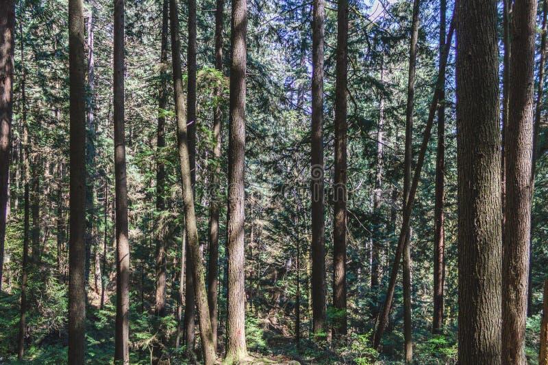 Baden Powell Trail dichtbij Steengroeverots in Noord-Vancouver, BC, Cana stock fotografie