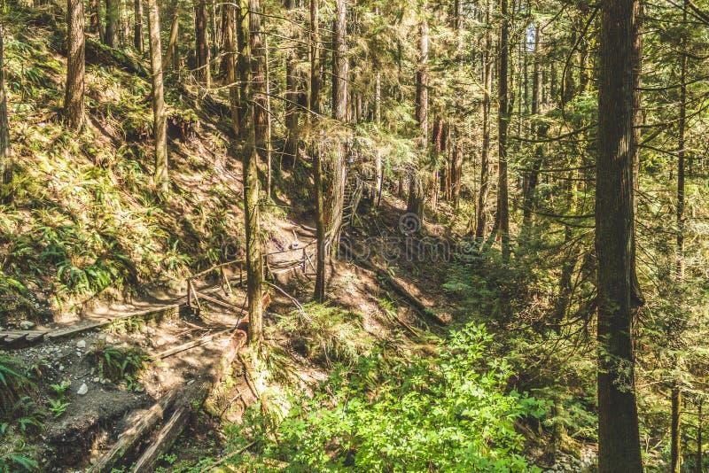 Baden Powell Trail dichtbij Steengroeverots in Noord-Vancouver, BC, Cana royalty-vrije stock afbeelding