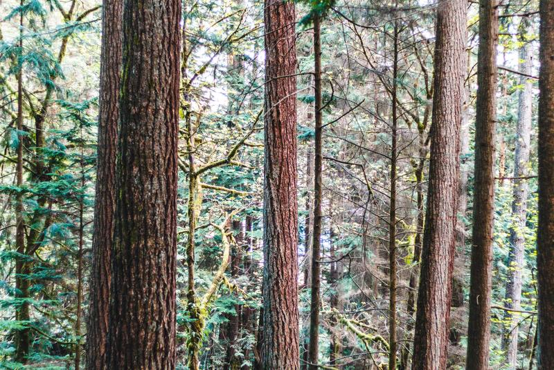 Baden Powell Trail dichtbij Steengroeverots in Noord-Vancouver, BC, Cana stock foto