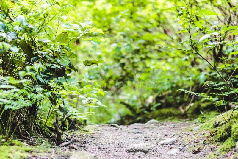 Baden Powell Trail dichtbij Steengroeverots in Noord-Vancouver, BC, Cana stock afbeeldingen