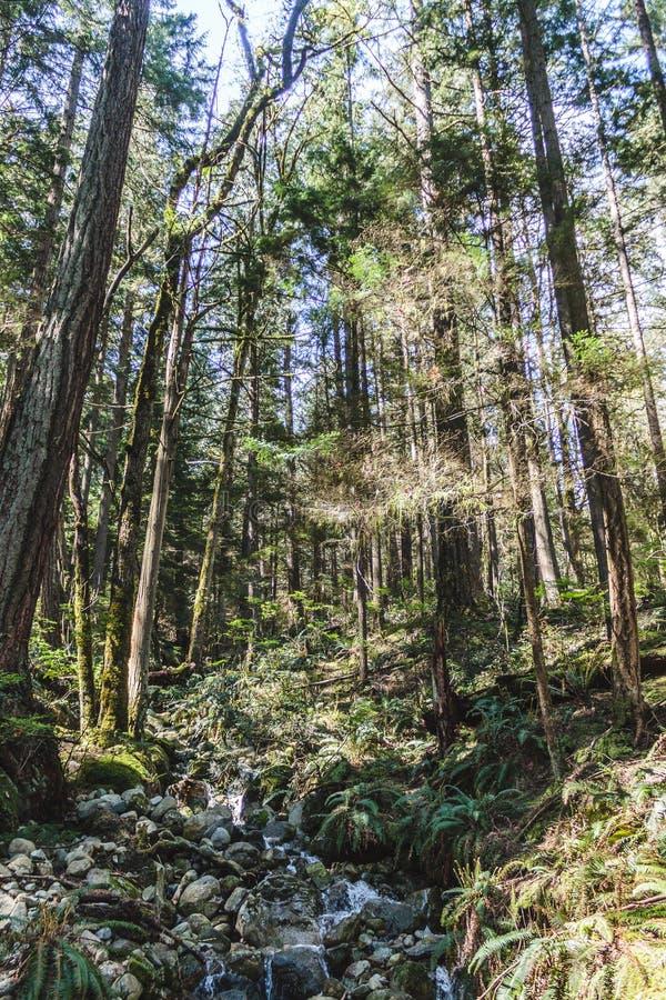 Baden Powell Trail perto da rocha da pedreira em Vancôver norte, BC, Cana fotos de stock royalty free