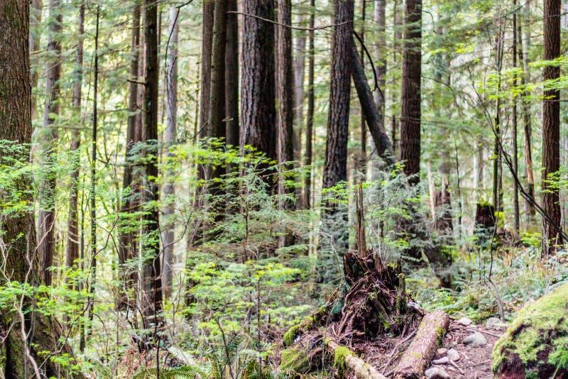 Baden Powell Trail perto da rocha da pedreira em Vancôver norte, BC, Cana foto de stock royalty free