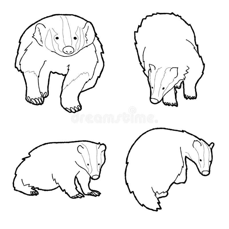 Badger Animal Vector Illustration Hand Drawn Cartoon Art vector illustration