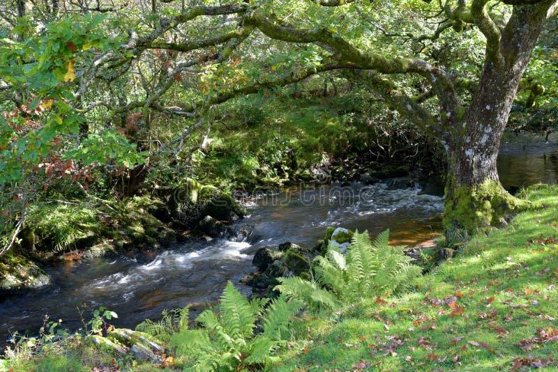 Badgworthy River in Doone Valley, Exmoor, North Devon. Badgworthy River near Malmsmead in the Doone Valley, Exmoor, North Devon stock photos