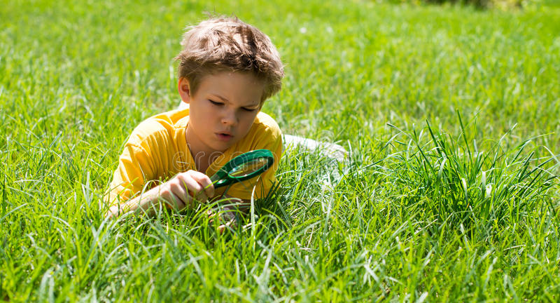 Badinez sur le pré regardant l'herbe avec une loupe photos stock