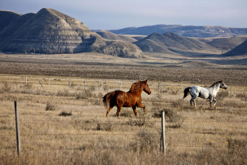 Badlands Canada Saskatchewan royalty free stock photo