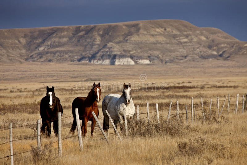 Badlands Canada Saskatchewan royalty free stock images