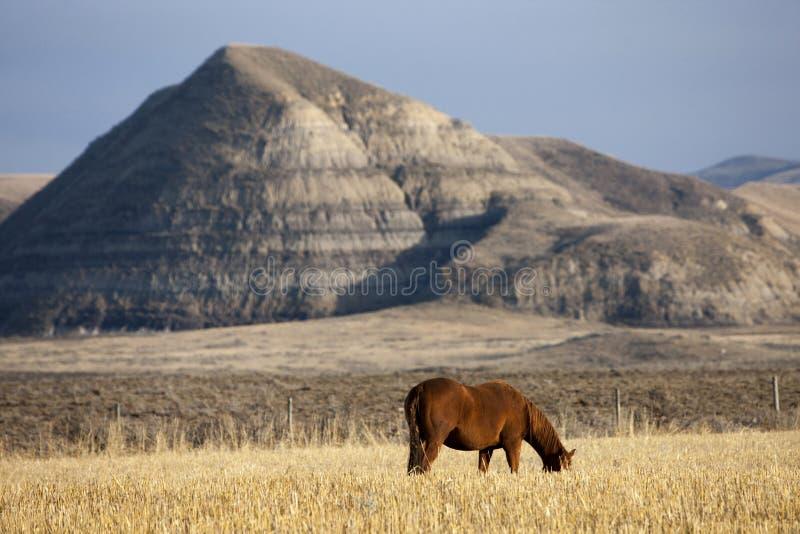 Badlands Canada Saskatchewan royalty free stock image