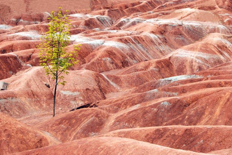 Badlands con un árbol solitario foto de archivo libre de regalías